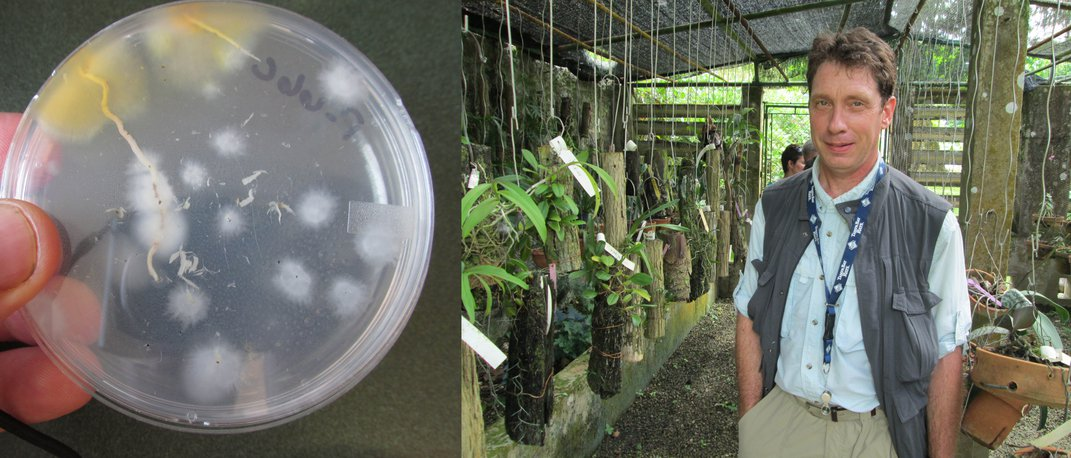 Left: Fungi in petri dish. Right: Man standing in sheltered garden