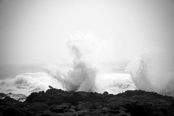 Pacific Ocean Spray thumbnail
