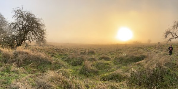 Child at the edge of a misted meadow thumbnail