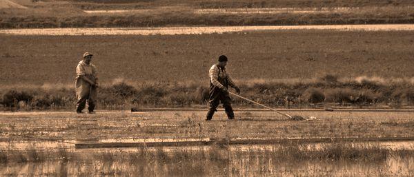 Harvesting Cranberries thumbnail