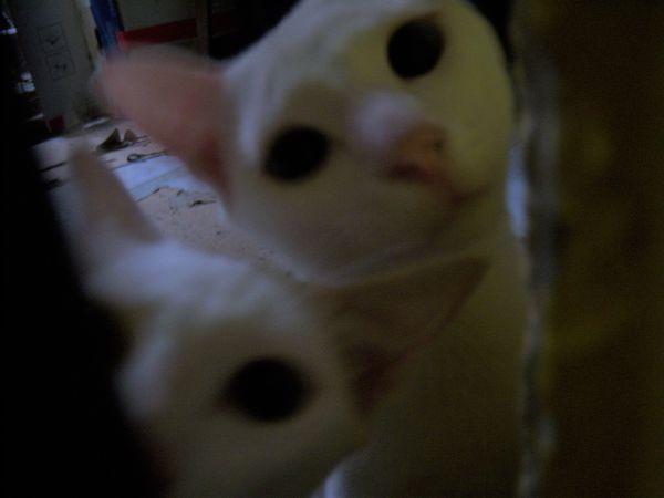 Curious Cats thumbnail