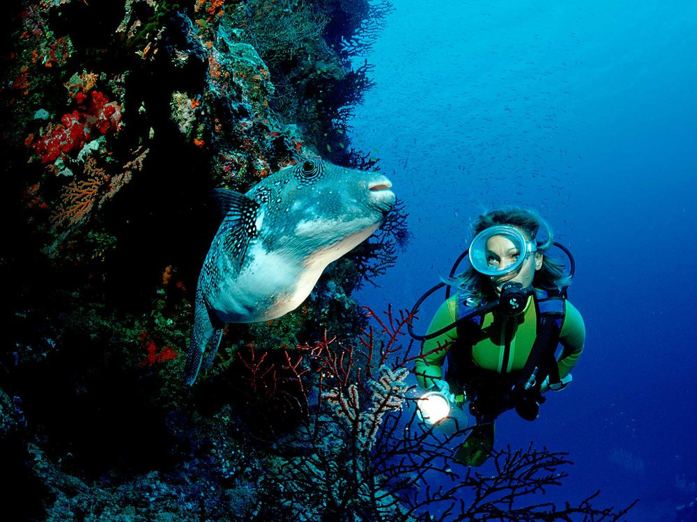 Diver and Fish