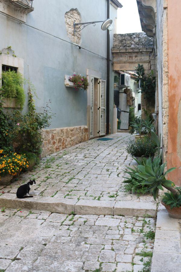 Cat on a Street in Ragusa thumbnail
