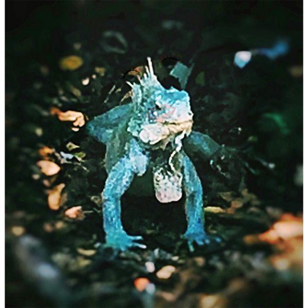 Mr. Iguana thumbnail