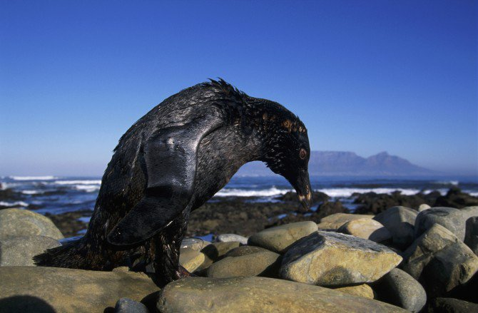 Why We Pretend to Clean Up Oil Spills