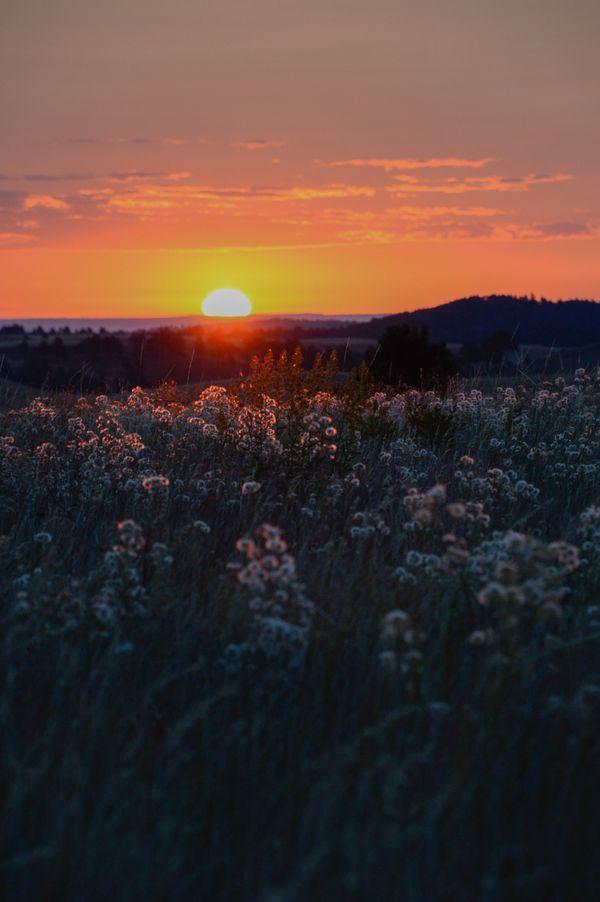 Montane Prairie Sunrise thumbnail