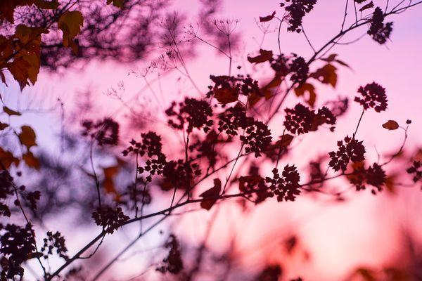 autumn fire thumbnail