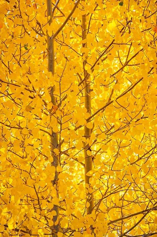 Autumn glows in the Sweatwater Mountains thumbnail