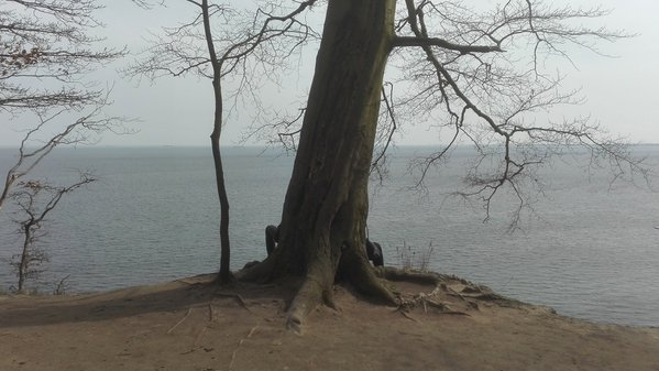 A couple leans on a leaning tree thumbnail