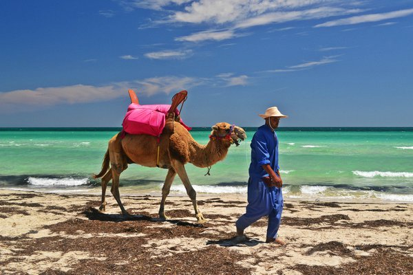 The camel and the sea thumbnail