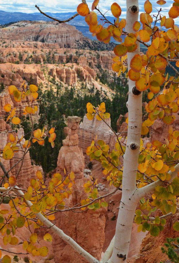 Autumn at Bryce Canyon thumbnail