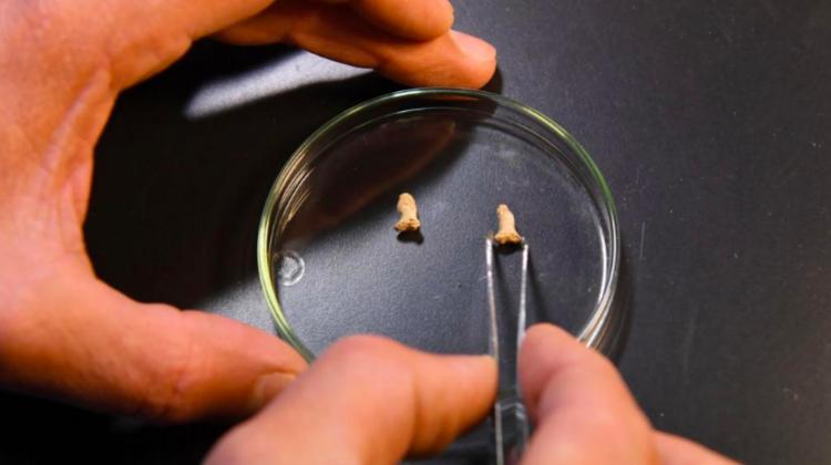 Neanderthal Bird Bones