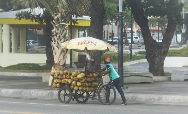 Pushing Coconuts on the Streets of Santo Domingo thumbnail