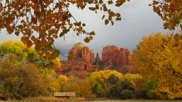 Peak fall colors at Cathedral Rock in Sedona, Arizona thumbnail