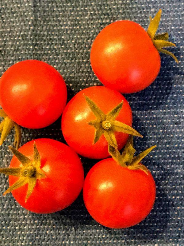 Cherry Tomatoes thumbnail