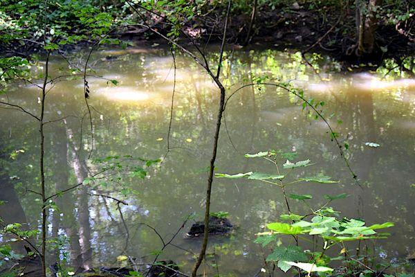 Mirroring in water IX thumbnail