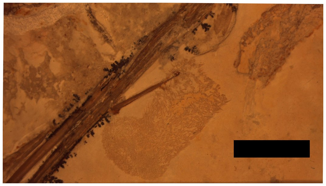 Fossilized Poop is Rare, Fossilized Poop Inside a Fossilized Dinosaur is Even Rarer