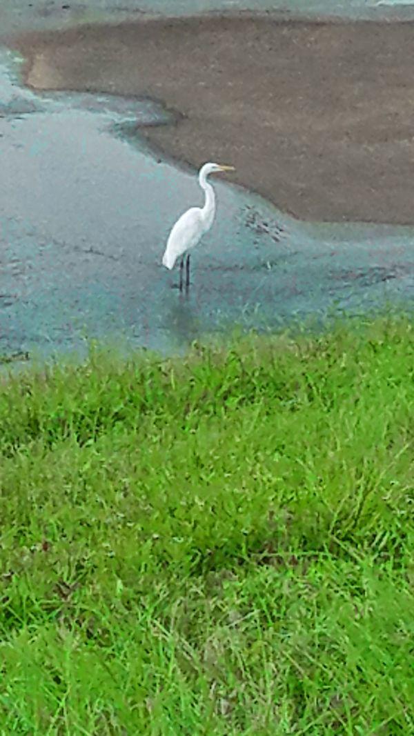 A crane enjoying the sound of a running stream. thumbnail