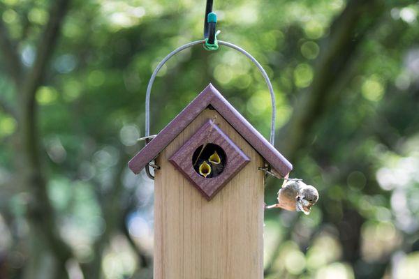 Hungry Birds thumbnail