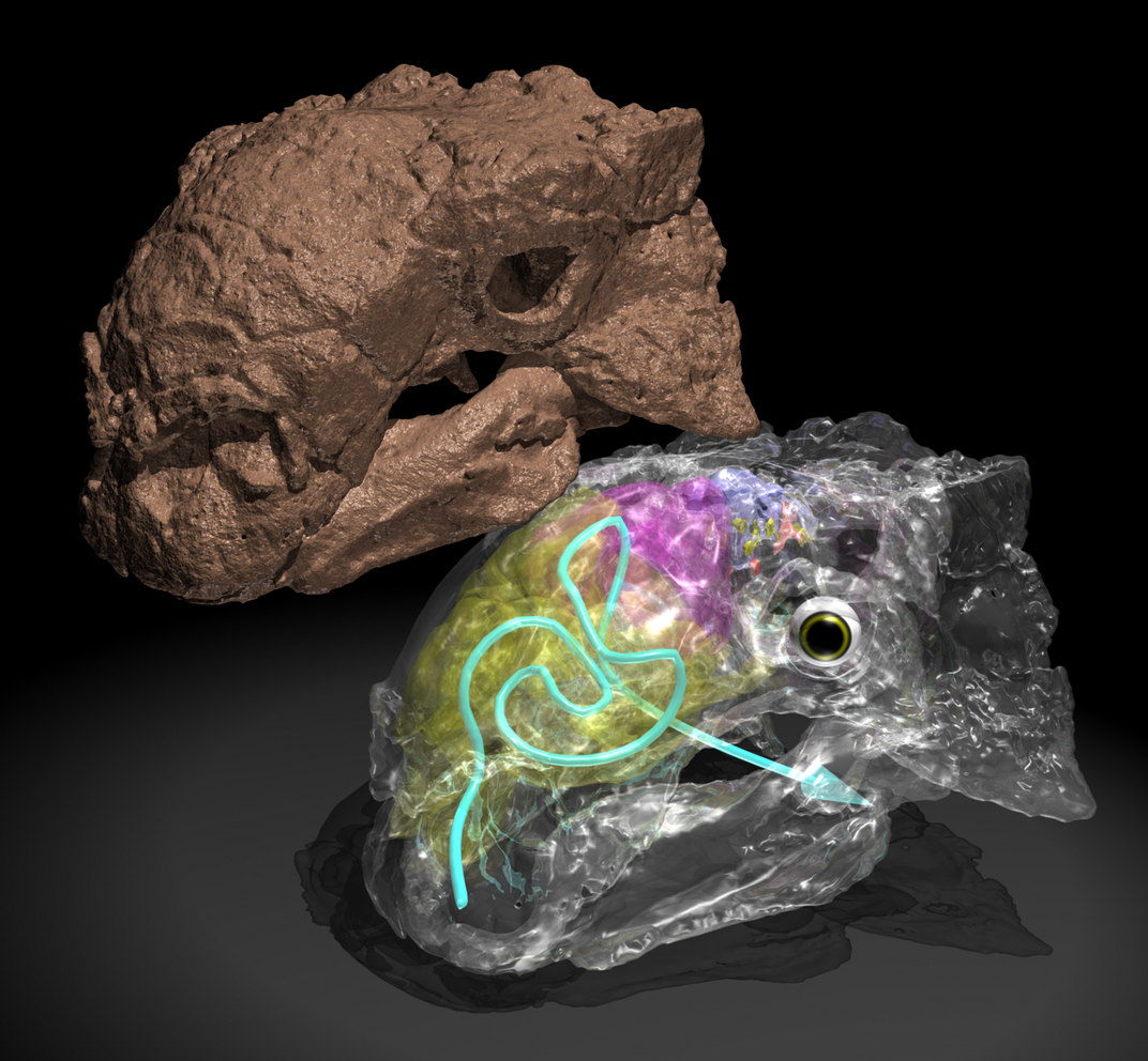 Armored Dinosaurs Kept Cool With a Labyrinth of Nasal Canals