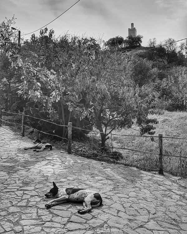 Two napping stray dogs thumbnail