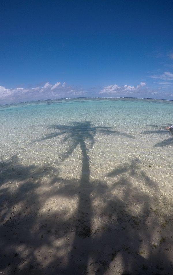 Palm Shadow in Polynesia thumbnail