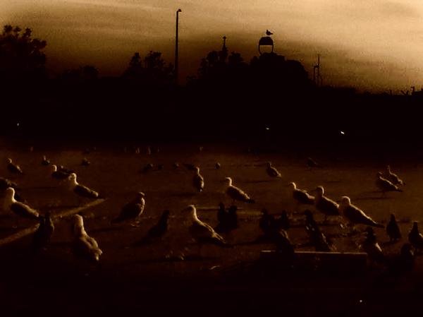Seagulls at Dusk thumbnail