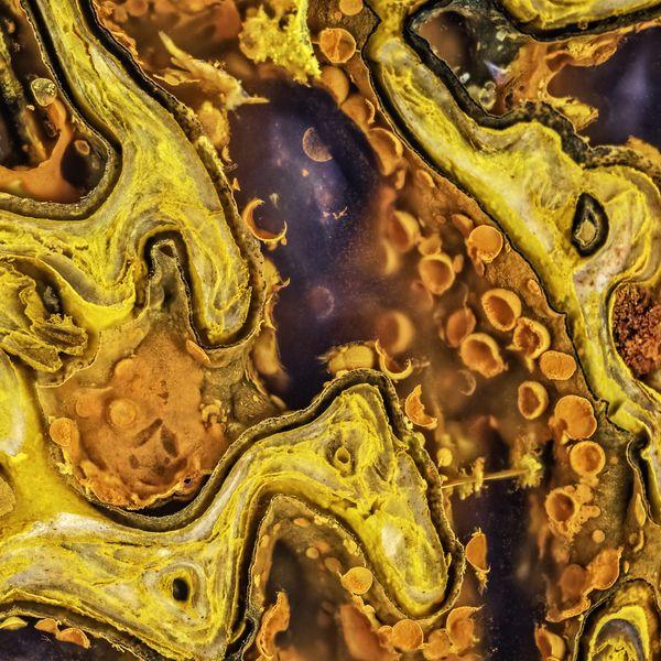 Yellow Dinosaur bone thumbnail