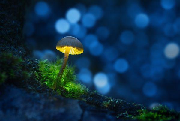 Magic mushroom thumbnail
