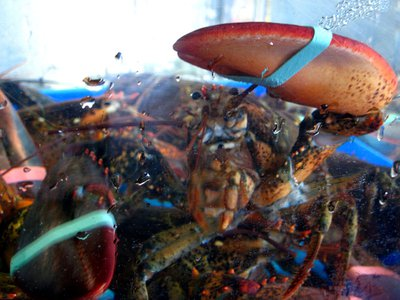 Lobsters in a tank at a fish market