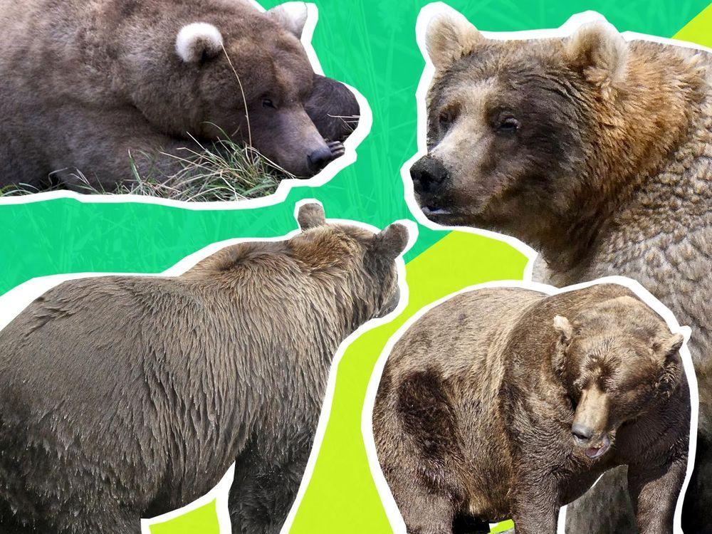 fat bear week 2k19