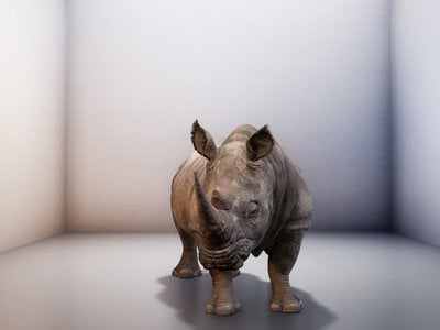 """Over its two-minute lifetime, the faux rhino (above: The Substitute) adapts """"to his environment and moves around. His form and his sound become more lifelike, but ultimately, he is coming to life without any natural context and in this completely digital form,"""" says the museum's curator Andrea Lipps."""