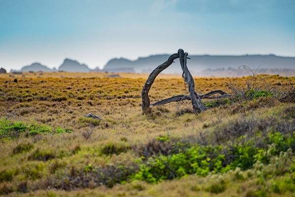 Desert of Aruba thumbnail