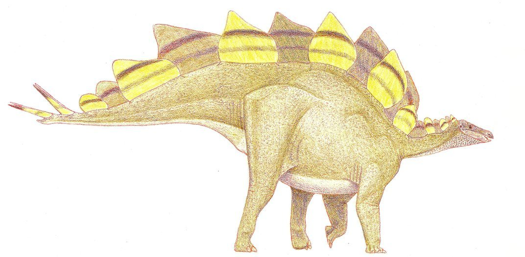 Right-facing Stegosaurus drawing with alternating brown and yellow plates along its back.