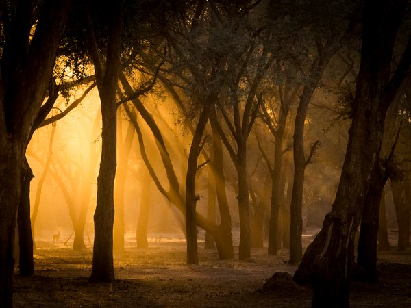 A kudu appearing like a fairy in the evening golden light. thumbnail