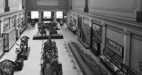 The Dinosaur Hall