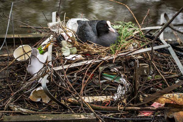 A Nest of Trash thumbnail