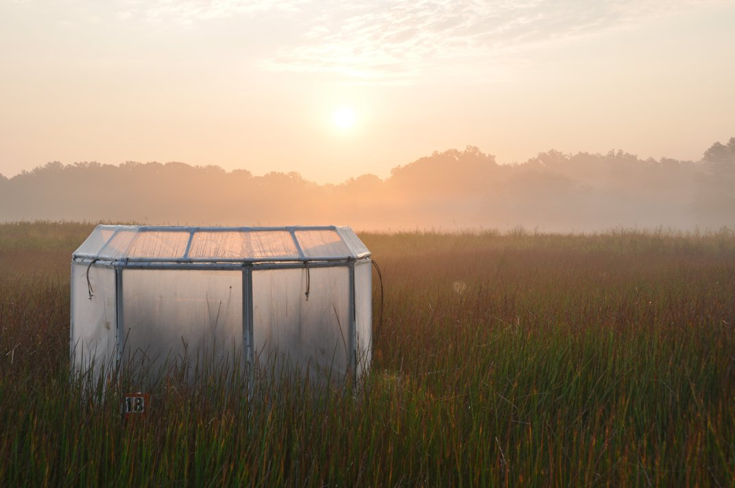 Marshes Grow Stronger When Faced With Increased Carbon Dioxide