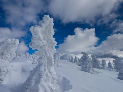 Ice and wind turn turn Japan's Maries' fir trees into frozen figures.