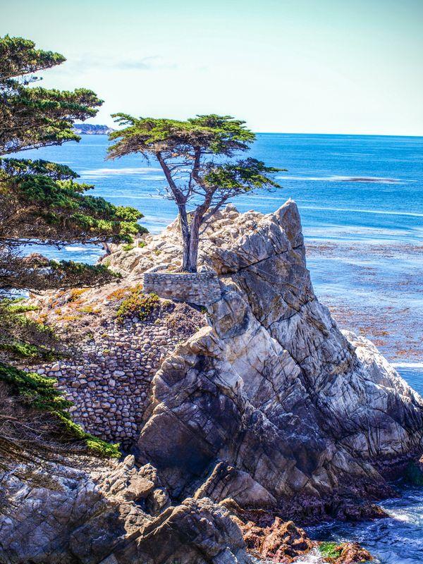 Bald Cypress tree  thumbnail