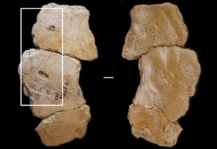 neanderthal_01_Edit.jpg