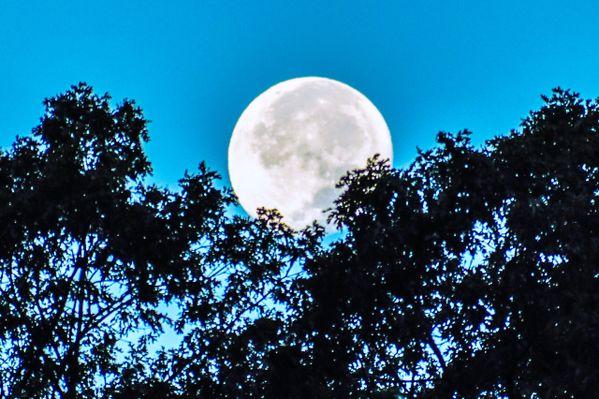 I see the Moon; Moon seizes Me thumbnail