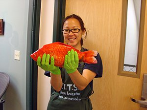 A giant goldfish recovered from Lake Tahoe.