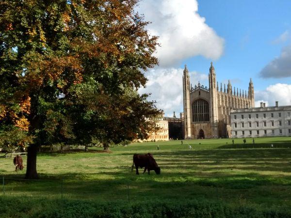 Cambridge Tradition thumbnail
