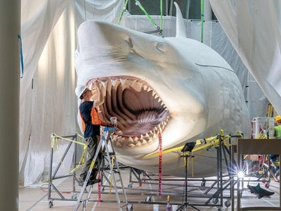 Artist Gary Staab assembles the massive megalodon. A scale model at the bottom right shows what the finished creature will look like.