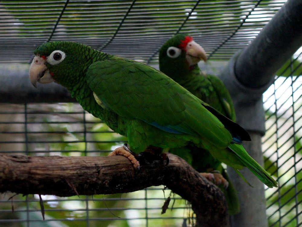 20110520102347PR_Parrots.jpg