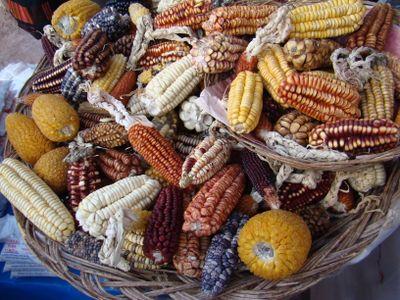 Varieties of maize found near Cuscu and Machu Pichu at Salineras de Maras on the Inca Sacred Valley in Peru, June 2007.