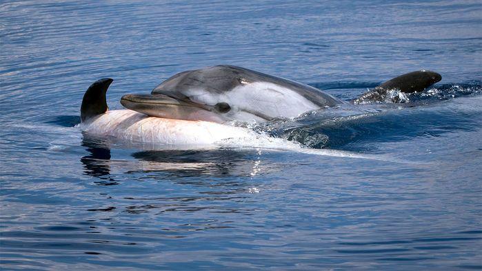 Dolphin Grief