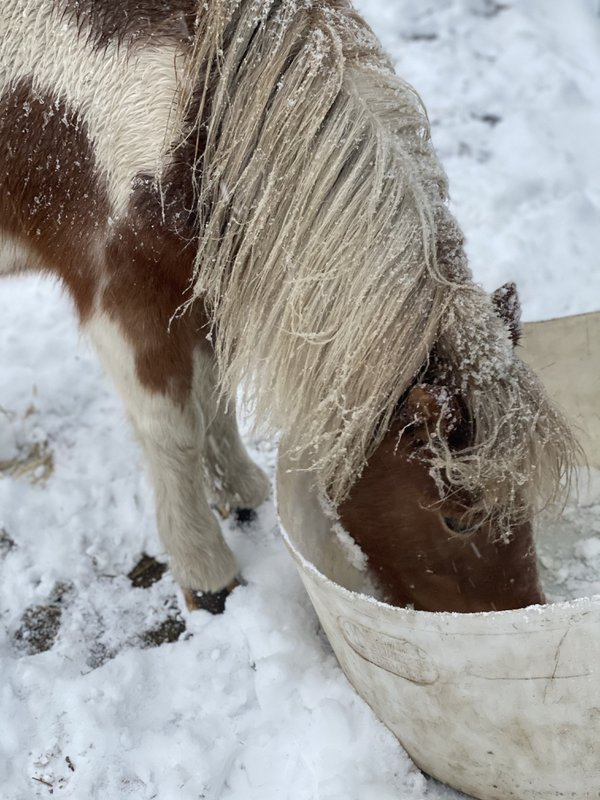 Pony in the snow! thumbnail