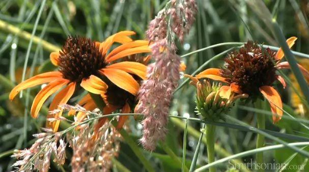 20110520110726Smithsonian-gardens.jpg
